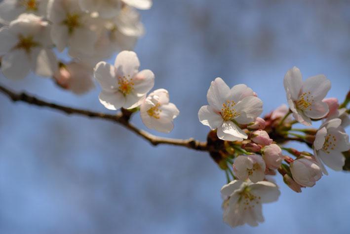 春は注射の季節