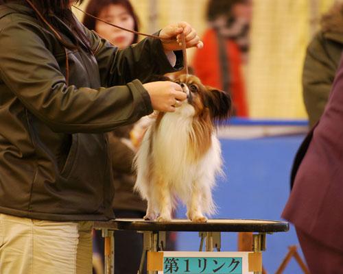 埼玉北愛犬オーナーズクラブ展