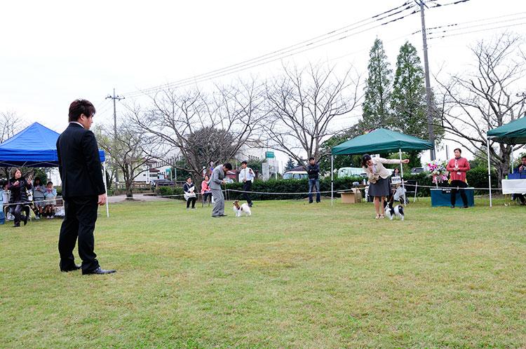 2016年 第7回福島パピヨンファンジャーズクラブ展