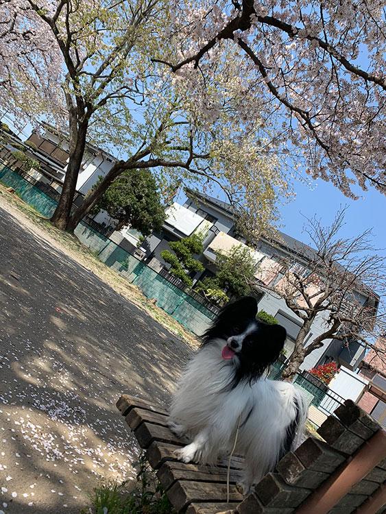 気が付いたら桜が・・・・