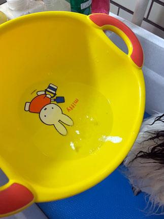 犬洗濯その1